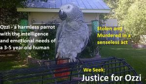 Justice for Ozzi https://www.facebook.com/Justice4Ozzi